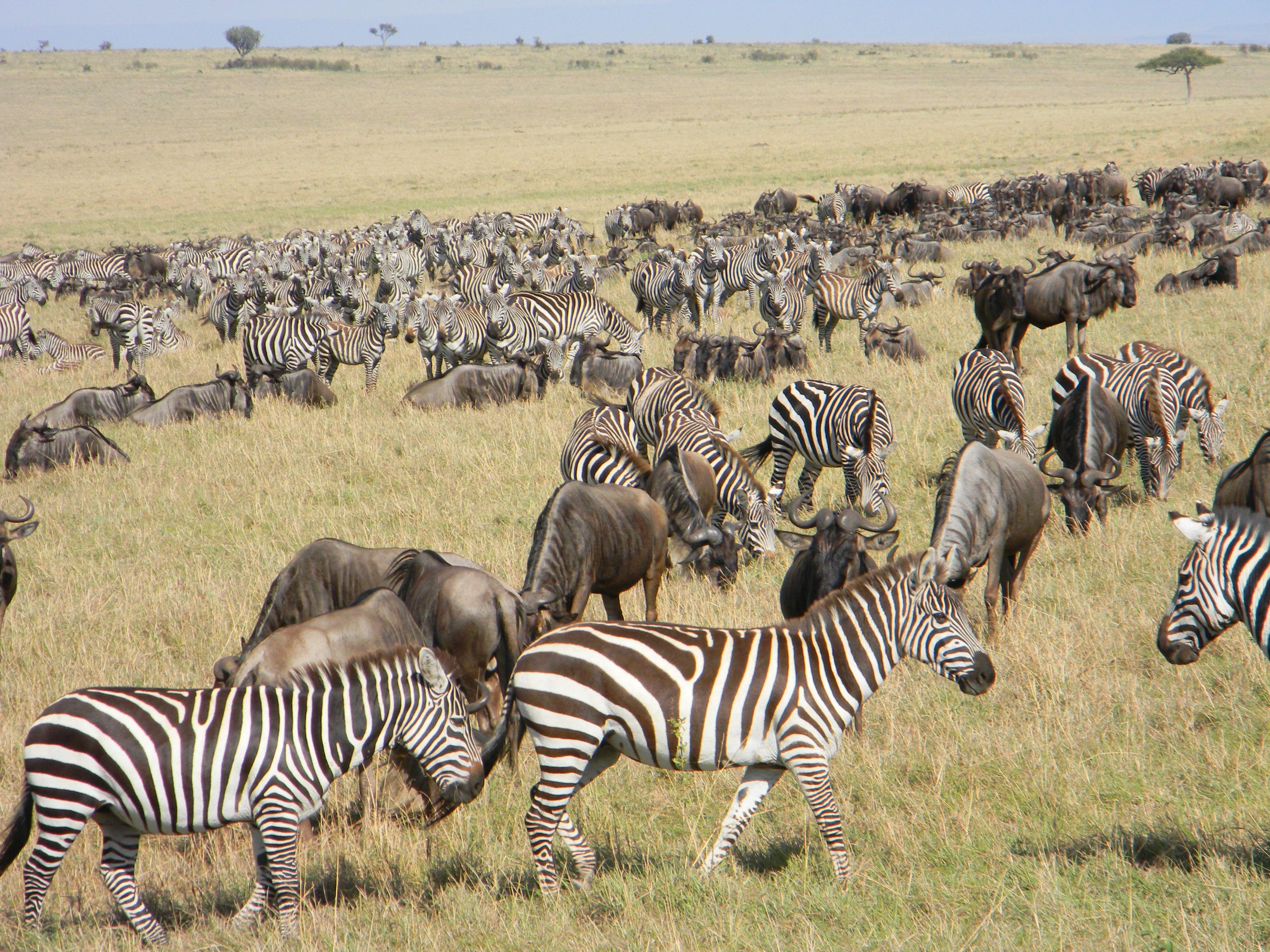 de denia a kenia  el safari  u2013 eatrop u00eda