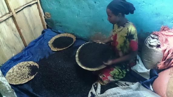 Selección de granos de café en la fábrica Nure, Harar. Foto: eaTropía